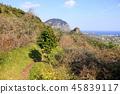 제주 바굼지 오름(단산)의 아름다운 풍경이다 45839117