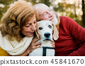 A senior couple with a dog in an autumn nature at sunset. 45841670
