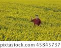农民 农夫 小麦 45845737
