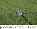 Female farmer examining wheat plant in field 45845741