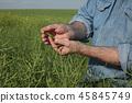 农民 农夫 作物 45845749