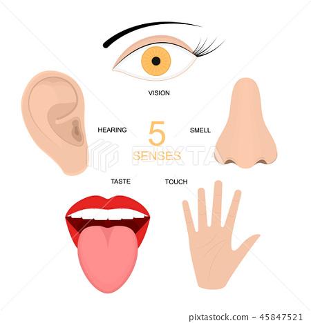 Cartoon Human Senses Signs Icon Set. Vector 45847521