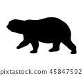 벡터, 곰, 실루엣 45847592