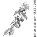 Cherry Branch Pencil Drawing 45850566