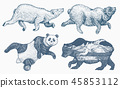 bear, animal, sketch 45853112