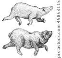 bear, animal, sketch 45853115