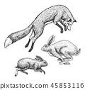 animal wild forest 45853116