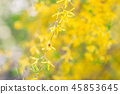 Ladybug on a yellow forsythia. Blurred background 45853645