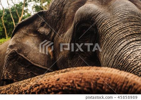 Close up portrait of elephant asia 45858989