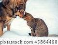 cat, friend, animal 45864498
