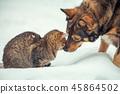 cat, animal, dog 45864502