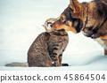 cat, animal, dog 45864504
