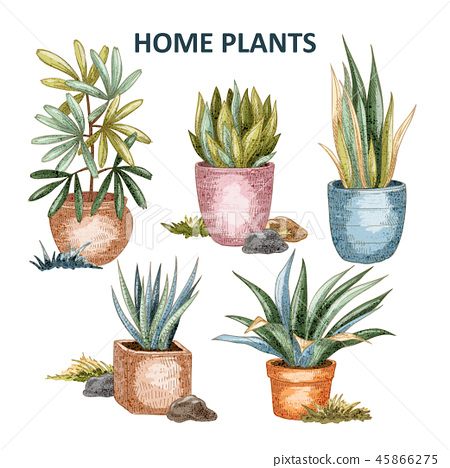 Home plant illustration 01 45866275