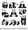 panda, animal, vector 45866693