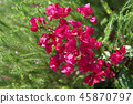 red blossoms inside of green tree branches 45870797