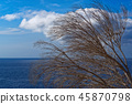Dry tree branches against blue sky and sea water 45870798