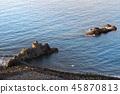 Swimming in the blue water of Atlantic ocean 45870813