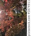 ใบไม้เปลี่ยนสีในฤดูใบไม้ร่วง Momiji ★★ 45874911