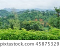 泰國 泰國清邁 景點 45875329