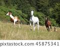 Batch of horses running on pasturage 45875341