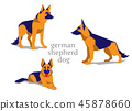sheepdog shepherd German 45878660