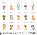 animal, rabbit, animals 45879580