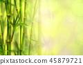 background bamboo frame 45879721