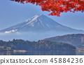 富士和秋葉 45884236