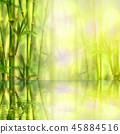 Bamboo forest with reflection in water background 45884516