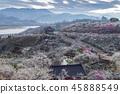 전라남도,광양,매화마을 45888549