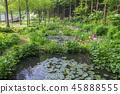 경기도,한국,용인,한택식물원 45888555