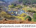 전라남도,구례,산수유마을 45888564