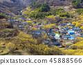 전라남도,구례,산수유마을 45888566