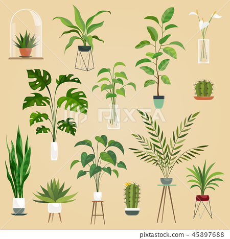 Plants in pots. Houseplant, succulent plants. Ficus planting in flowerpots vector isolated 45897688