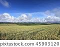 밀밭,풍경 45903120