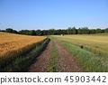 농로,시골,풍경 45903442