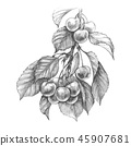 Sweet Cherry Pencil Drawing 45907681
