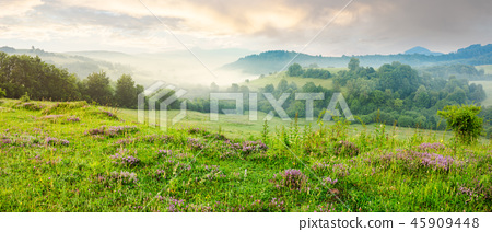 panorama of beautiful foggy morning in mountains 45909448