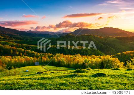 green wonderland at purple sunset 45909475