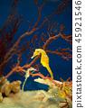 해마 물고기 해마 수족관 바다 물고기 45921546