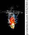 goldfish fish underwater 45925601