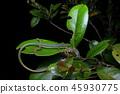 reptile, lizard, animal 45930775