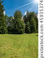 Evergreen Trees in Summer - Trentino Italy 45935374