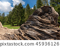 Trunk of Felled Oak on a Landscape with Trees 45936126