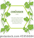 Coriander leaves banner on white background 45956684