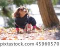 達克斯獵犬Kaninhaen可愛 45960570