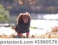 達克斯獵犬Kaninhaen可愛 45960576