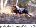 達克斯獵犬Kaninhaen可愛 45960578