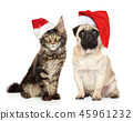 Puppy and kitten together in Santa hats on white 45961232