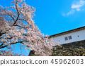 Sakuraba Hikone Castle 45962603